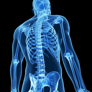 Healthy bones in rowers and scullers