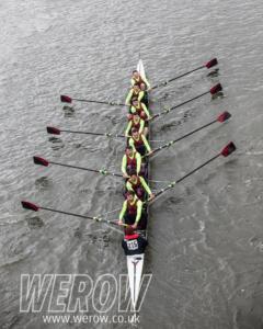 WEROW vets head 1750 240x300 - WEROW_vets head-1750